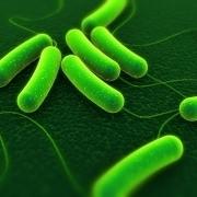 Mikroskopische Bildaufnahme einer Clostridium-difficile-Infektion
